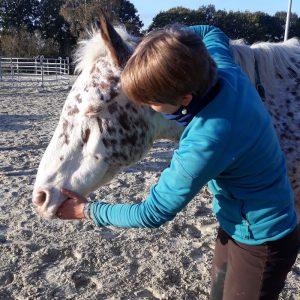 Arbeit am Pferdemaul