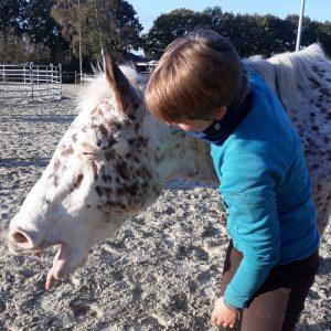 Pferd gähnt nach Maularbeit
