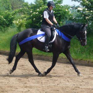Reitunterricht: Pferd wird mit Körperbändern geritten