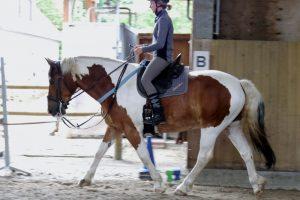 Reiterin trabt konzentriert mit einem braun-weißen Pferd.