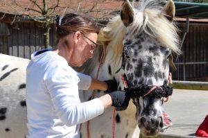 Bibi Degn arbeitet mit Stute Luna